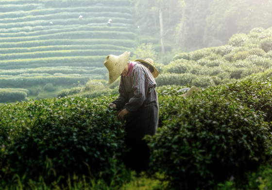 Les destinacions del Tea Maker